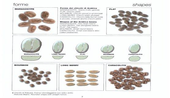 forme dei chicchi di caffè